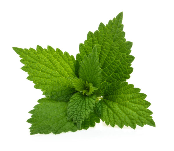 nettles - Nutritional Solutions for Hay Fever