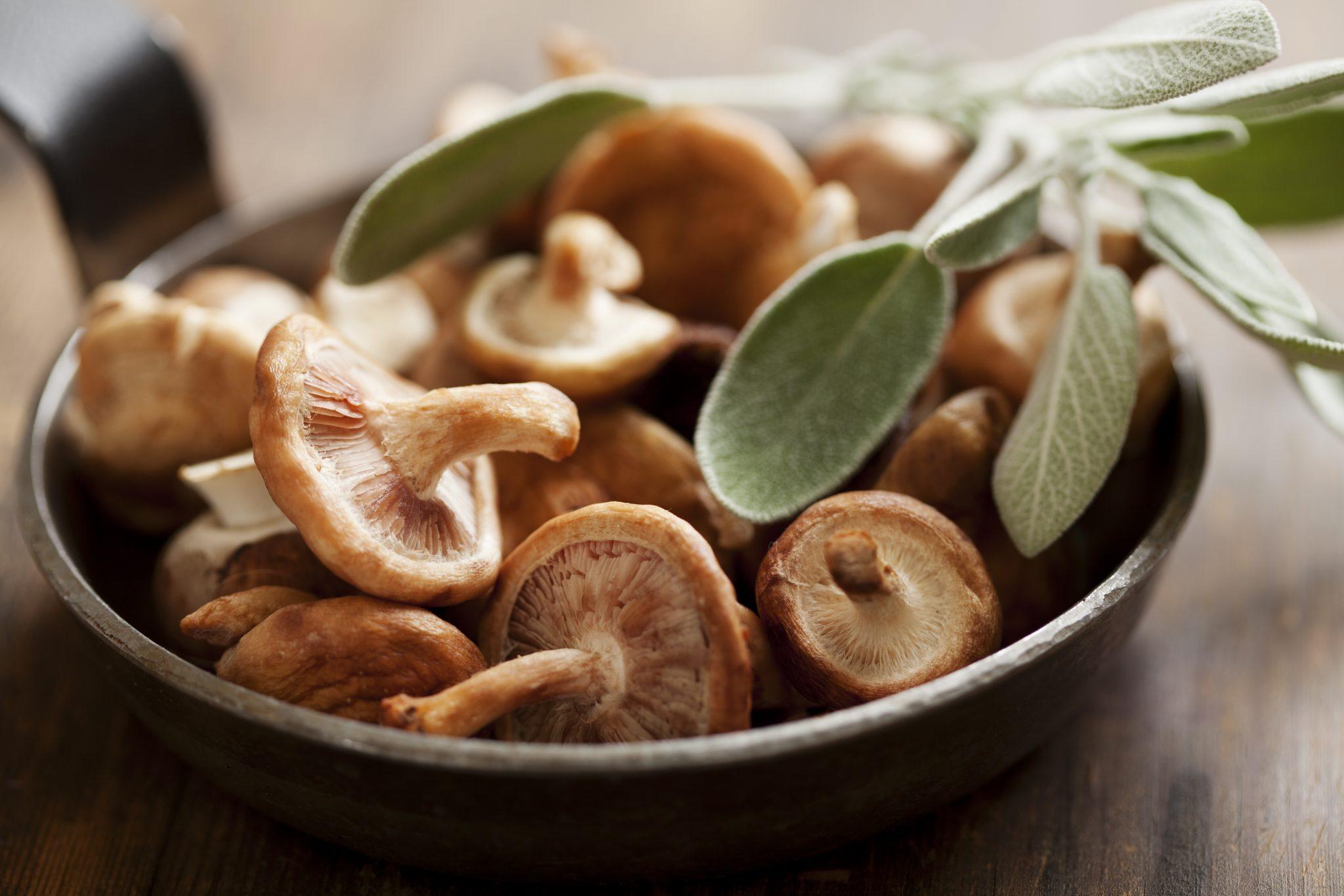 Medicinal Mushrooms and Immune Boosting Soup Recipe