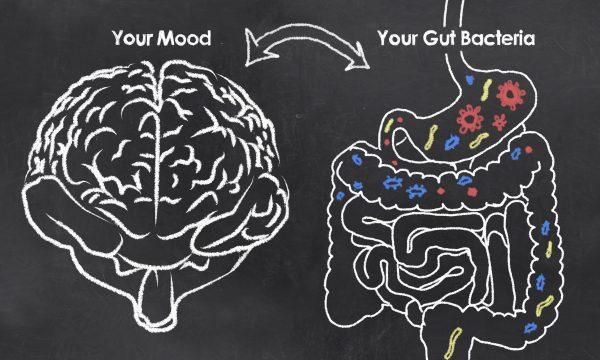 Mood gut bacteria