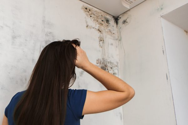 Mold in ceiling